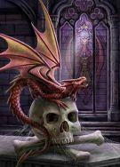 Baby dragon on skull