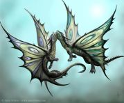 Butterfly dragons in love