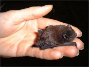 Bat on Hand